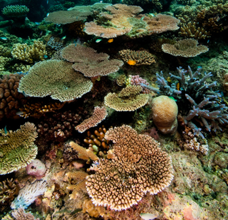 bpa-great-barrier-reef